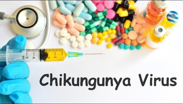 Chikungunya : Epidemic attack in India